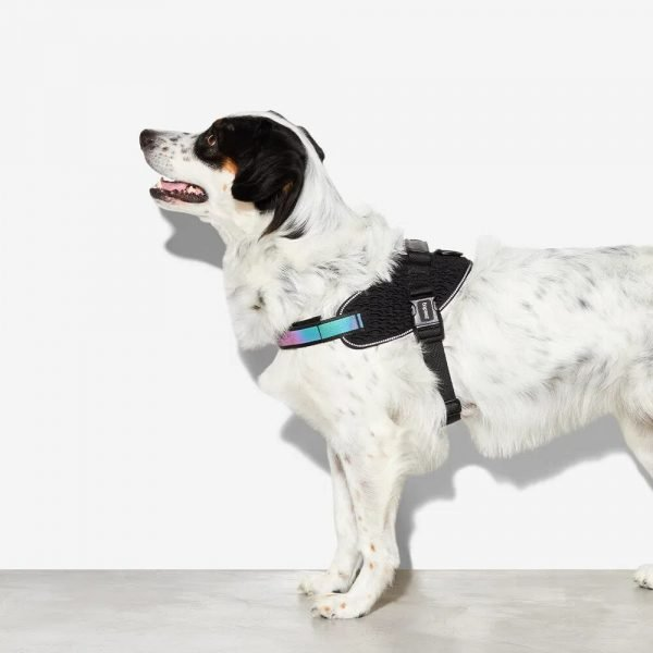Zee.Dog Gotham // FlyHarness