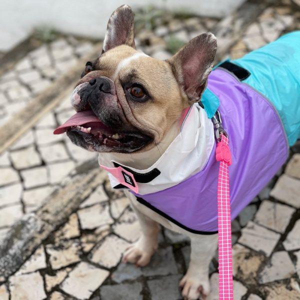 Zeedog capa de chuva Bel Air