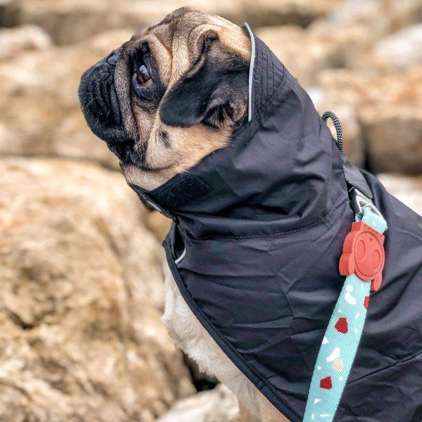 Zeedog Capa de chuva Ozzy
