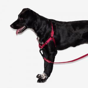 Zee.Dog Bordeau Soft-Walk Harness
