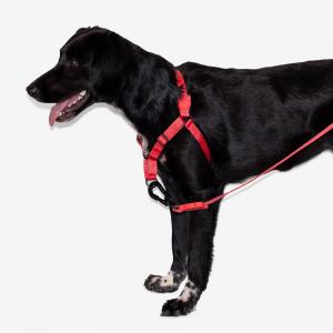 Zee.Dog Neon Coral Soft-Walk Harness