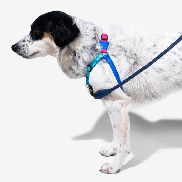 Zee.Dog Cooly Soft-Walk Harness