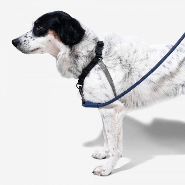 Zee.Dog Gotham Soft-Walk Harnes